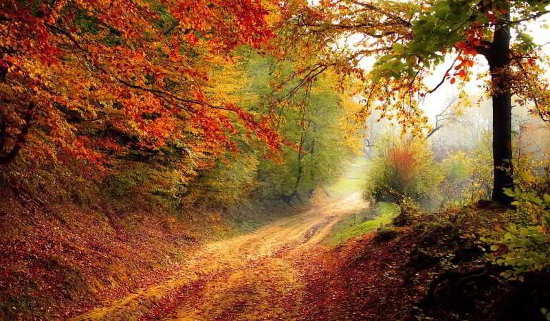 Symbolbild: Herbst, CC0, Pixabay